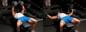 exercices pecs haltères