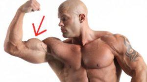 pic du biceps
