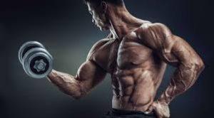 programme biceps